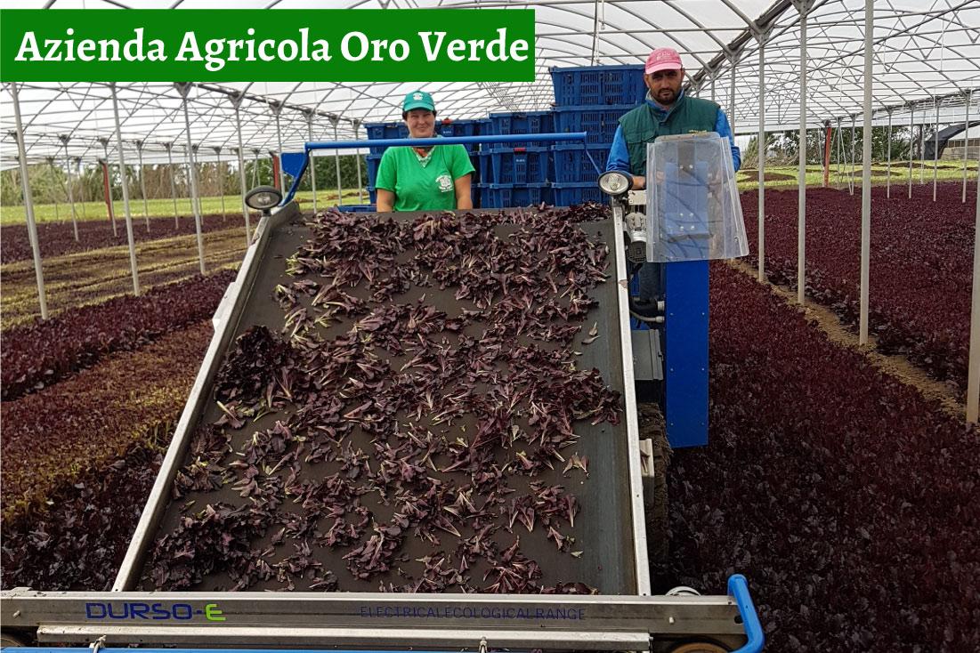 Azienda Agricola Oro Verde