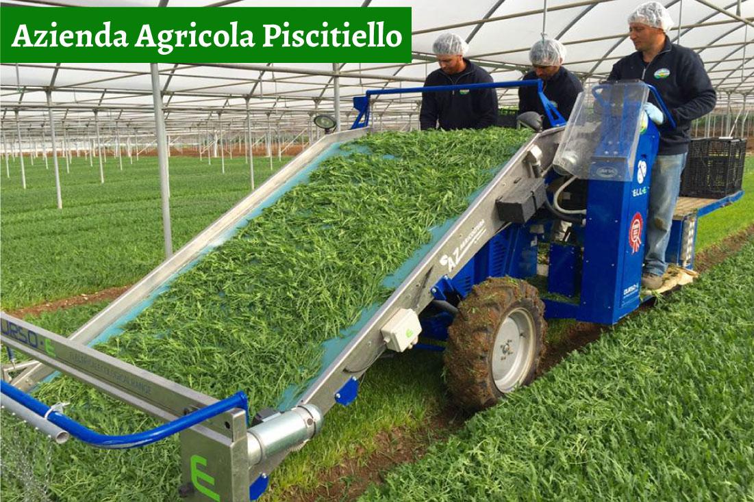 Azienda Agricola Piscitiello